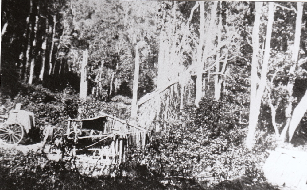 Clearing the forest at Tongarra c.1870. Courtesy Wollongong City Library.