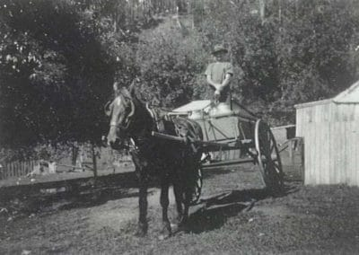 Driving a horse and cart to deliver milk from Clover Hill, Macquarie Pass c.1947. Donated by William Sawtell.