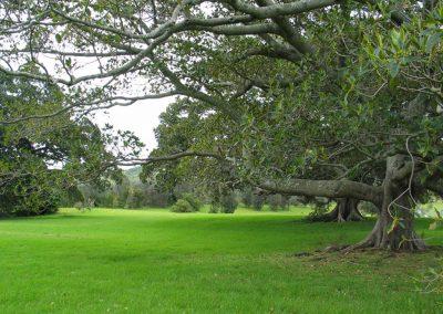 Killalea Watsonia 2